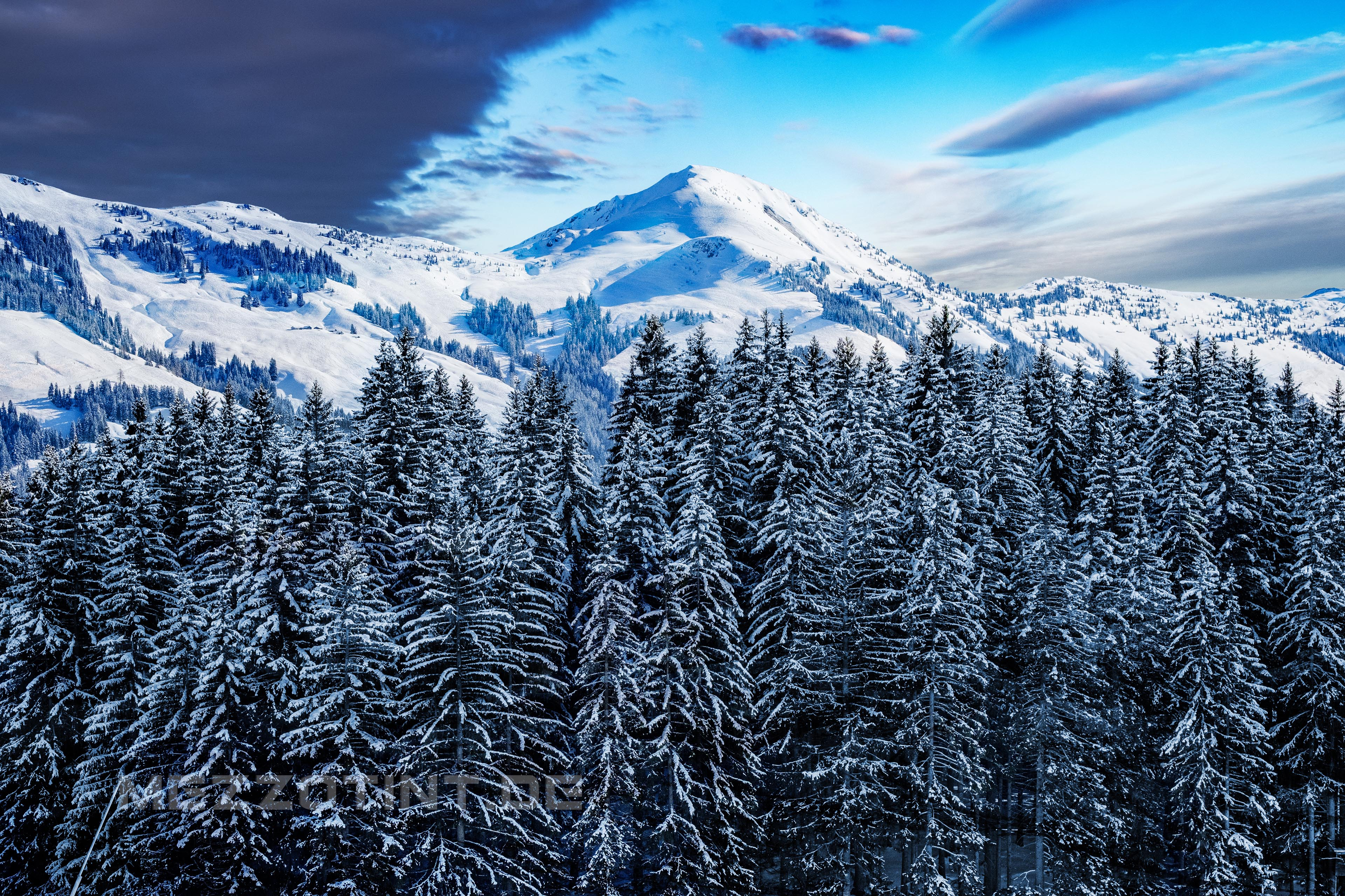 winter forest alps